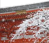 京都 01月の行事予定