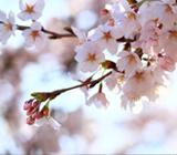 京都 04月の行事予定