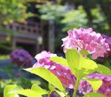 京都 06月の行事予定