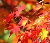 京都 11月の行事予定
